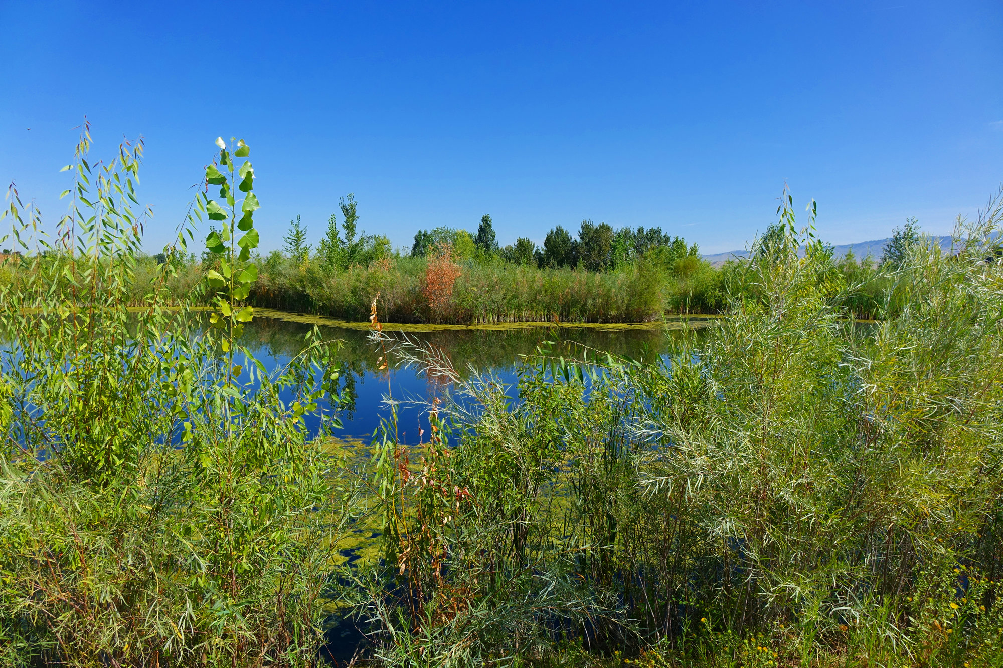 Hyatt Hidden Lake Preserve in West Boise